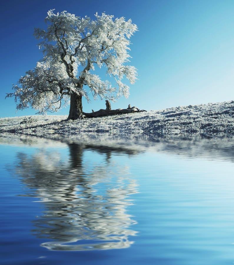 ensam fryst tree arkivfoto