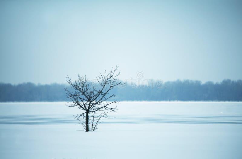 ensam härlig tree för solnedgång för sommar för fältgreenliggande arkivfoton