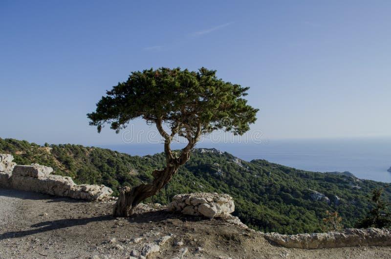 ensam härlig tree för solnedgång för sommar för fältgreenliggande royaltyfri fotografi