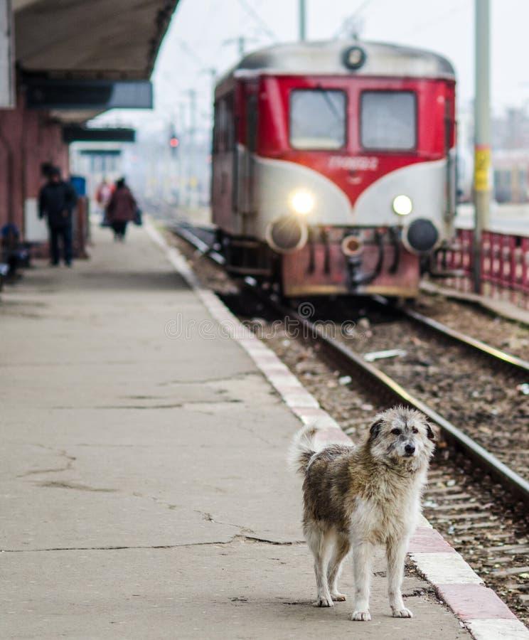 Ensam hund arkivfoto