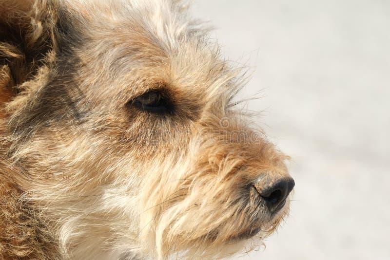 ensam hund arkivbilder