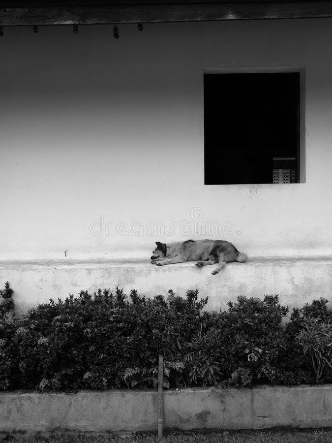 Ensam hund arkivfoton