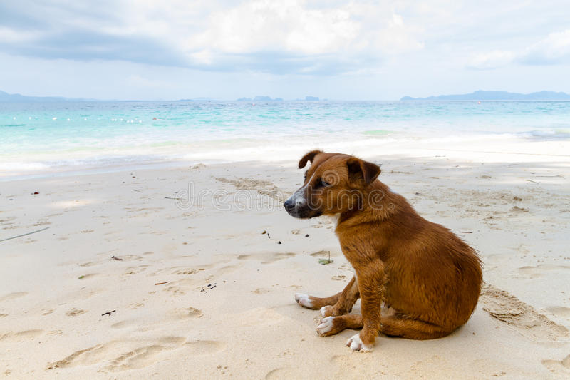 Ensam hund på stranden arkivbild