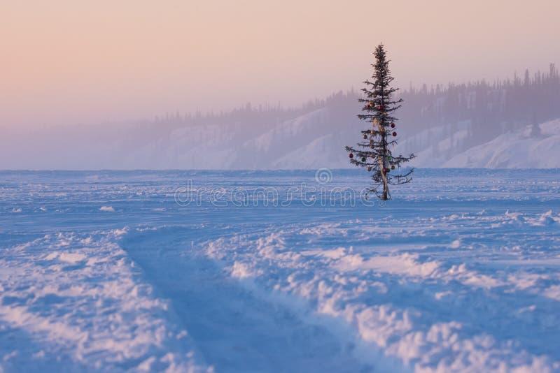 Ensam julgran på den djupfrysta sjön, Yellowknife, Kanada arkivbild