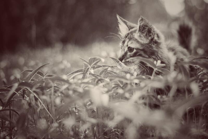 ensam katt arkivbild