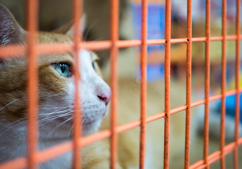 Ensam katt i bur fotografering för bildbyråer