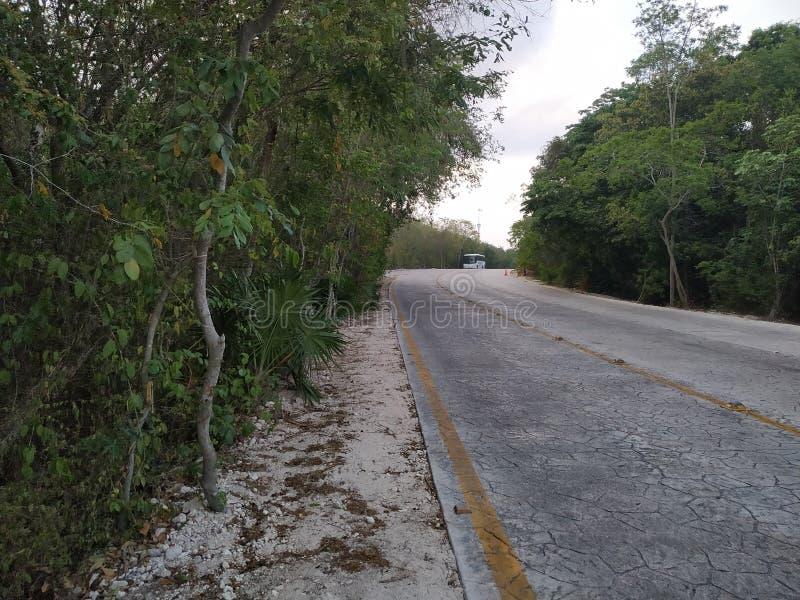 ensam kullerstenbana Mexiko och träd royaltyfri bild