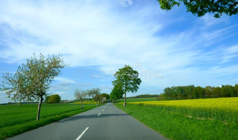 Ensam landsväg i vår Tyskland Schleswig-Holstein royaltyfria foton