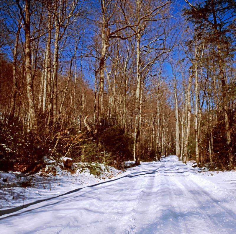Ensam landsväg i vinter royaltyfri fotografi