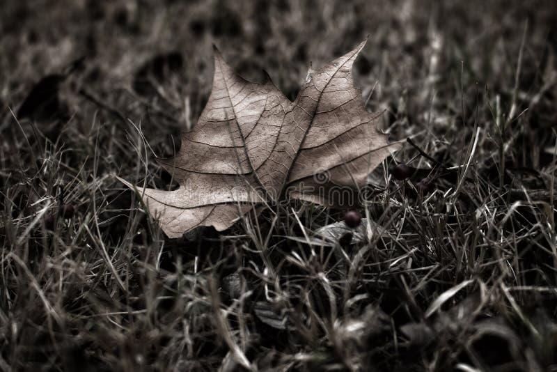 ensam leaf royaltyfri fotografi