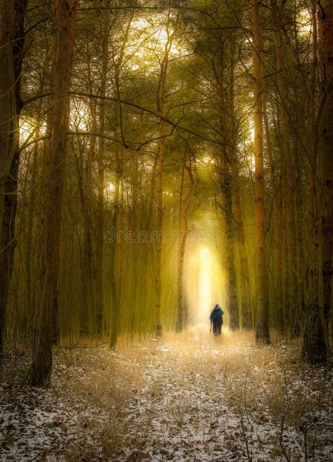 ensam mörk skog arkivbilder