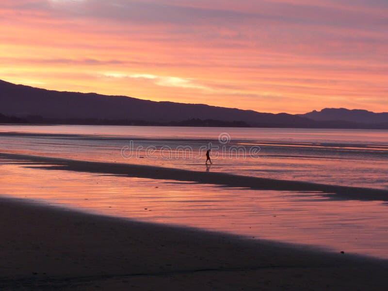 Ensam man som går på stranden, de härliga färgerna av himmel och havet på solnedgången i Nya Zeeland arkivbild
