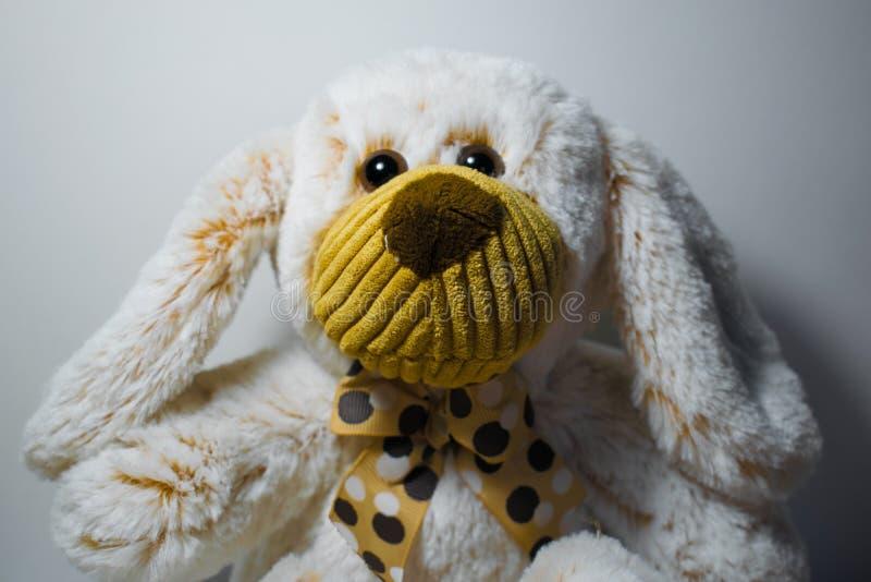 Ensam mjuk leksaknallebjörn på en vit bakgrund i bruna skuggor arkivfoton