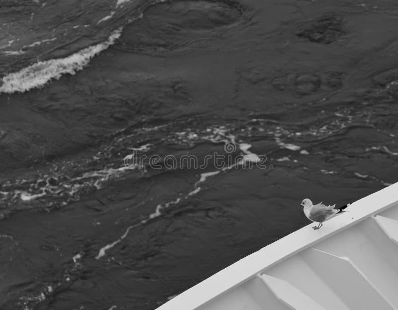 Ensam seagull som sitter på skeppbrädet arkivfoto