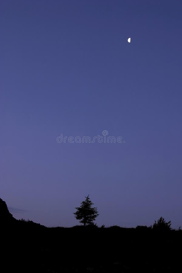 ensam sky royaltyfri foto