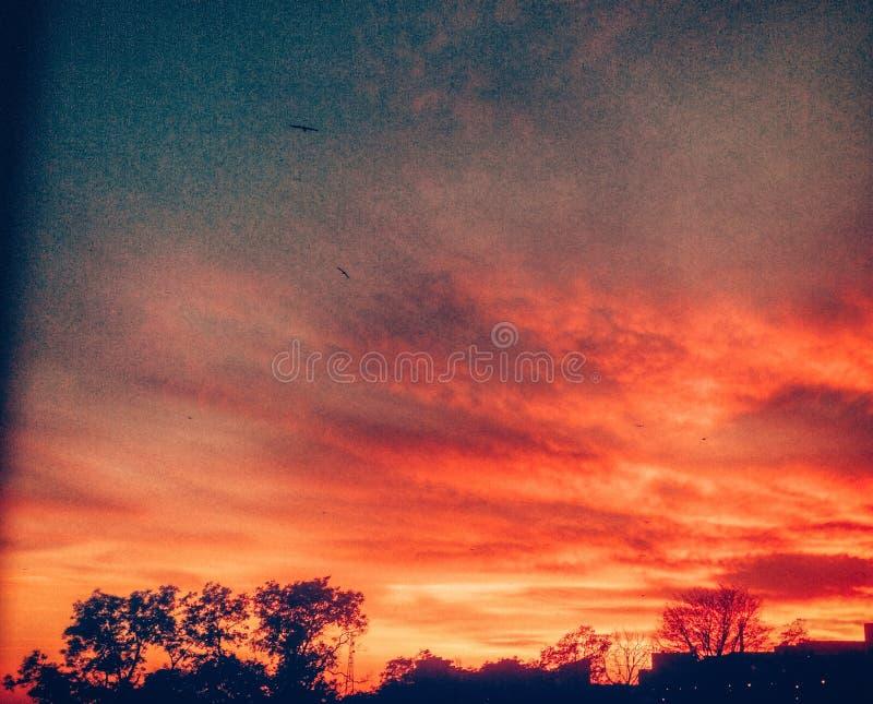 ensam solnedgång arkivbilder