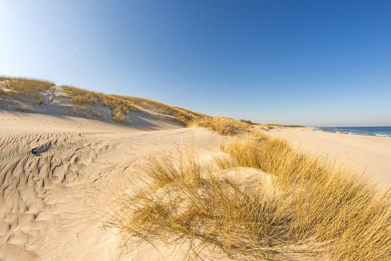 Ensam strand av ?stersj?n royaltyfri bild