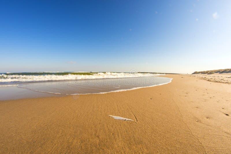 Ensam strand av ?stersj?n med bl? himmel royaltyfri fotografi
