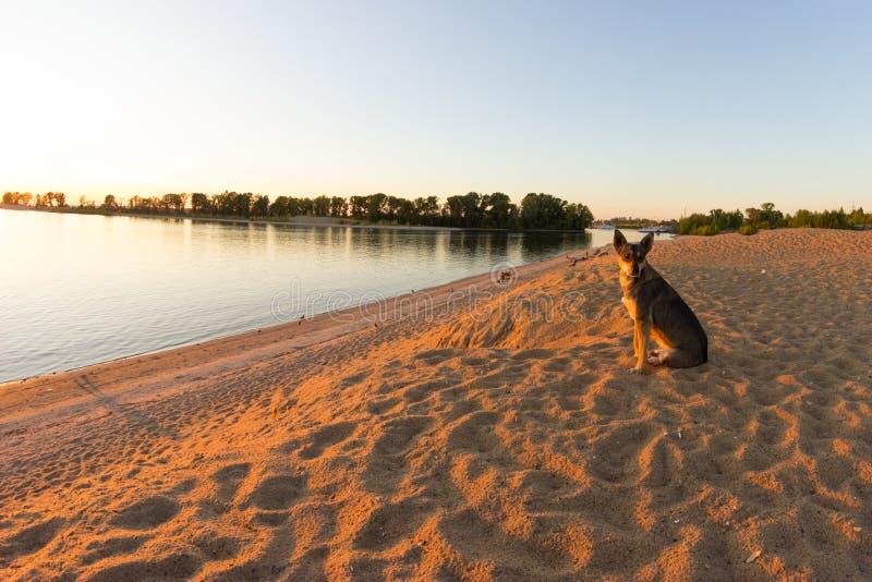 ensam strandhund royaltyfri foto