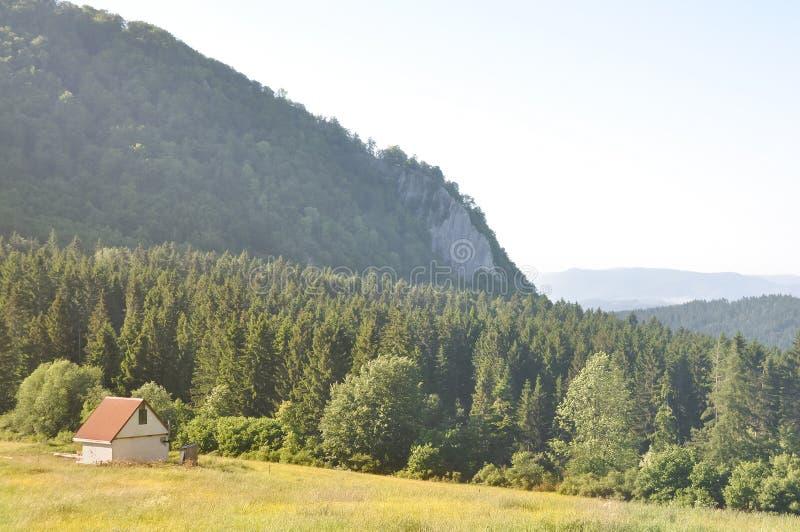 Ensam stuga på bergssidan i skog royaltyfri bild