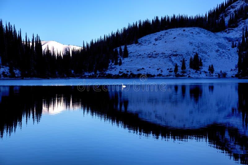 Ensam svan efter första snöfall på sjön royaltyfri foto