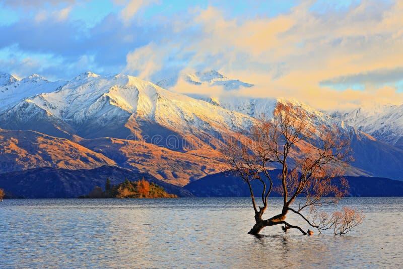 Ensam träd den berömda sjöWanaka gränsmärket royaltyfria bilder