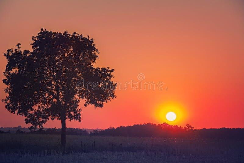 Ensam trädsolnedgång royaltyfria foton