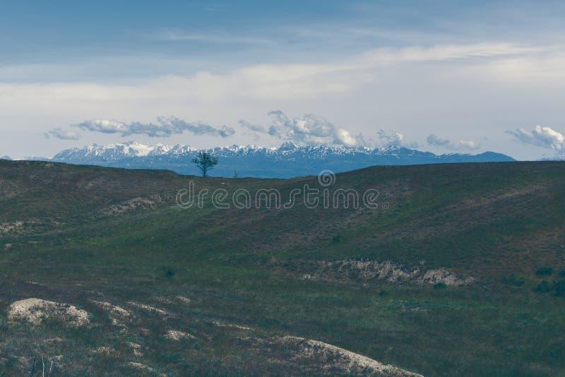 ensam tree clouds berg arkivbild