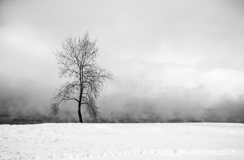 ensam tree för dimma fotografering för bildbyråer