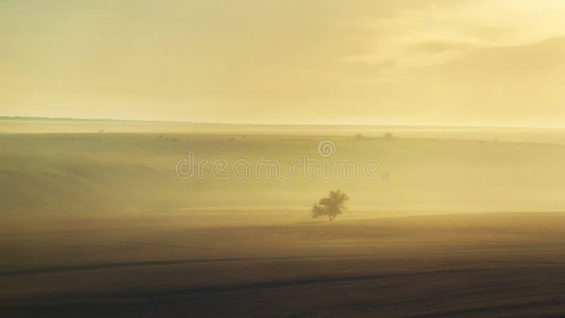ensam tree för dimma royaltyfria foton