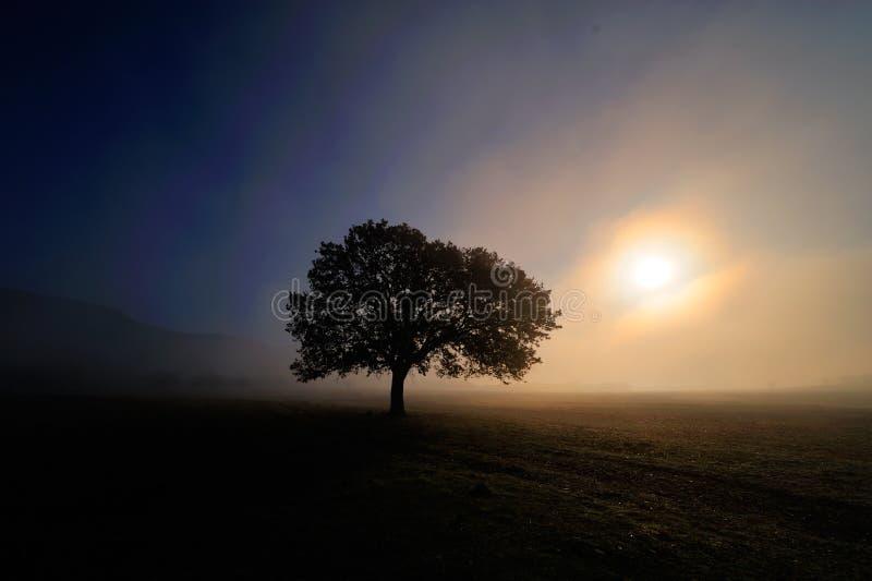 ensam tree för gryningfält arkivbild