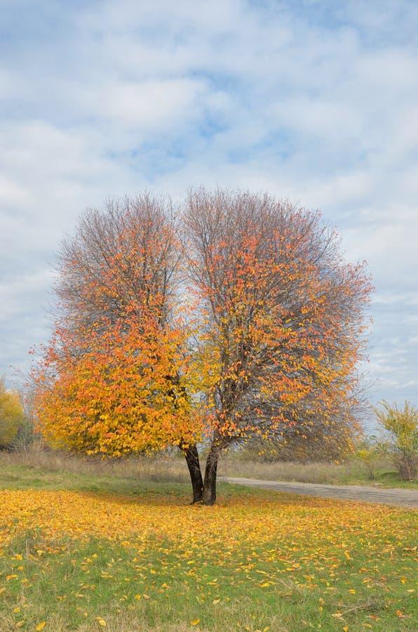 ensam tree för höst royaltyfri foto