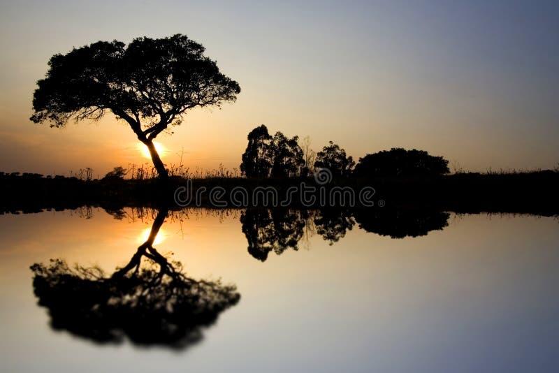 ensam tree för liggande arkivfoto
