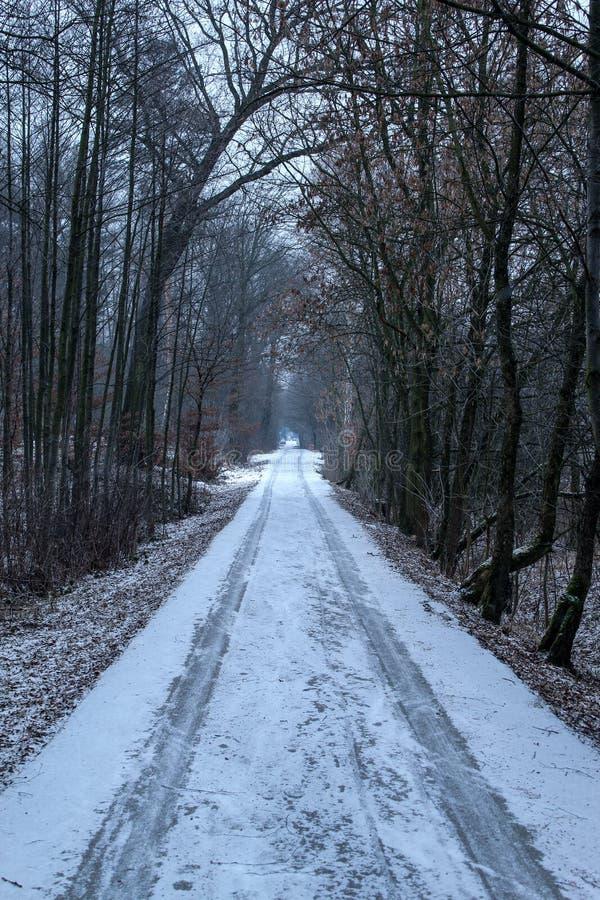 Ensam väg i skogen arkivbild