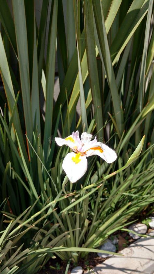 Ensam vit blomma över trottoargatan arkivbilder