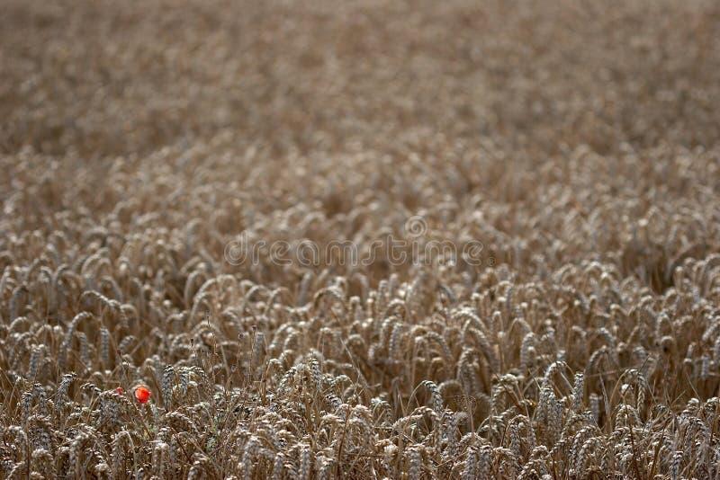 Download Ensamhet fotografering för bildbyråer. Bild av olikt, ensling - 285537