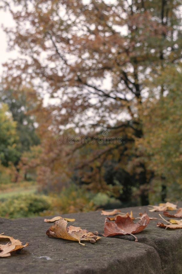 Ensamhetbegrepp - selektiv fokus för Autumn Fall Maple blad arkivbilder