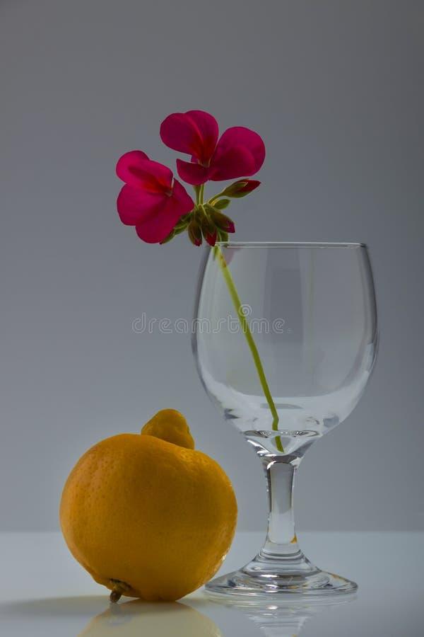 Ensamheten av den gamla limefrukten 1 livstid fortfarande royaltyfria bilder