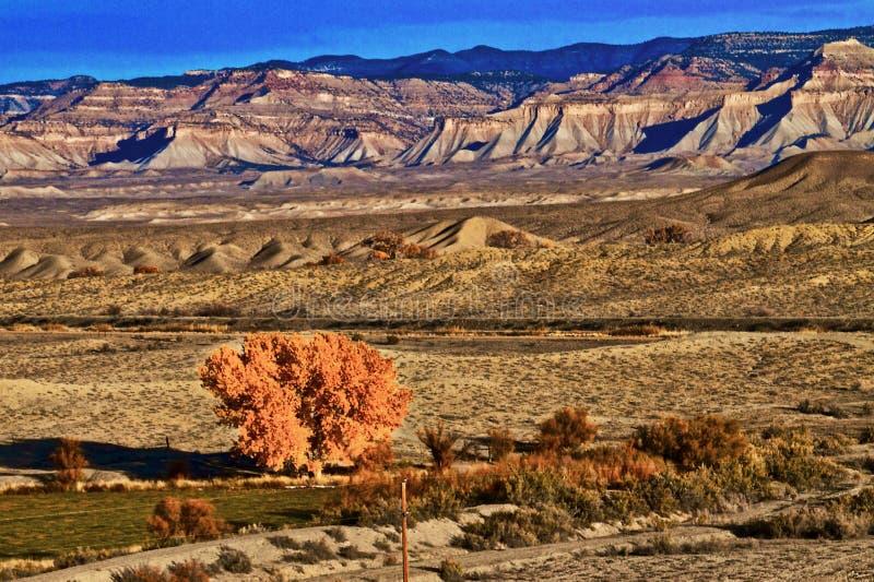 Ensamma Autumn Tree i dalen arkivfoto