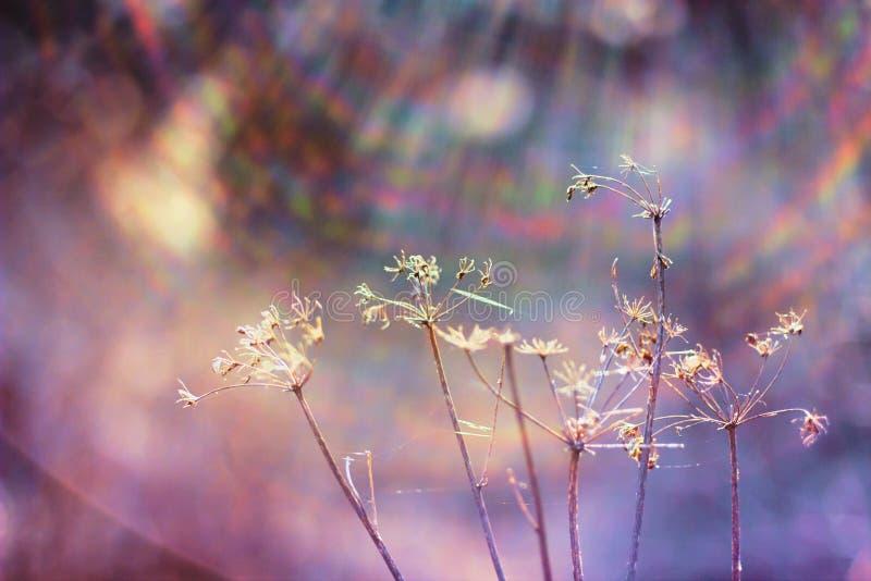 Ensamma fältogräs i ängen fotografering för bildbyråer