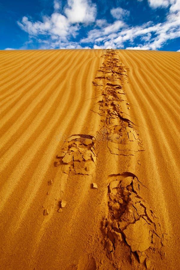 Ensamma fotspår på ökensanddynen arkivbilder