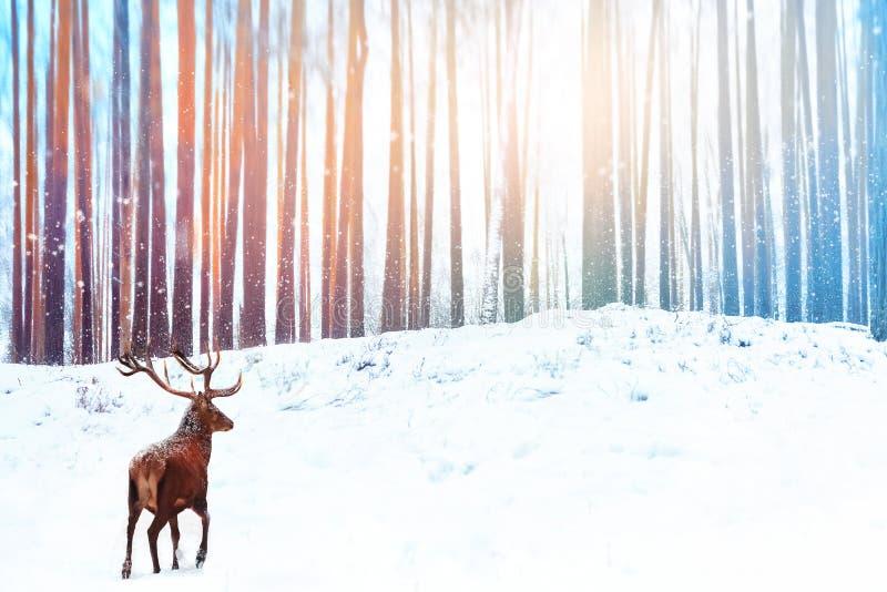 Ensamma nobla hjortar mot snöfall för felik skog för vinter Bild för vinterjulferie arkivbilder