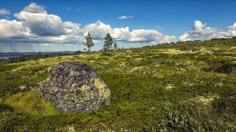 Ensamma stenar i tundran. Kola Peninsula royaltyfri bild