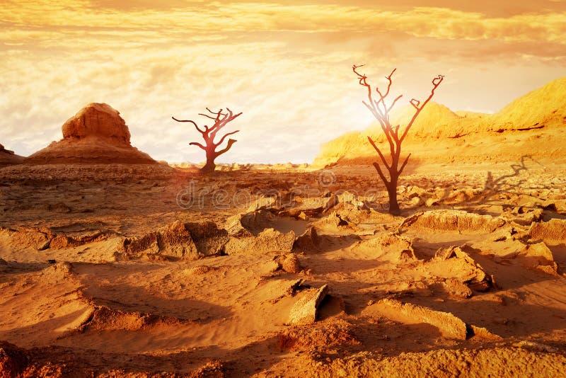 Ensamma torra träd i öknen mot en härlig röd och gul himmel och moln Konstnärlig naturlig bild Främmande planetbegrepp royaltyfria foton