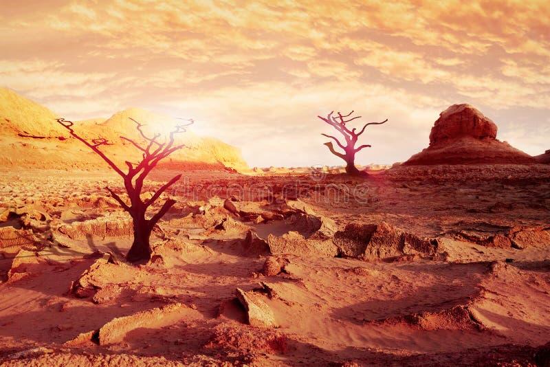 Ensamma torra träd i öknen mot ett härliga rött, rosa färger och gulinghimmel och moln Konstnärlig naturlig bild arkivbild