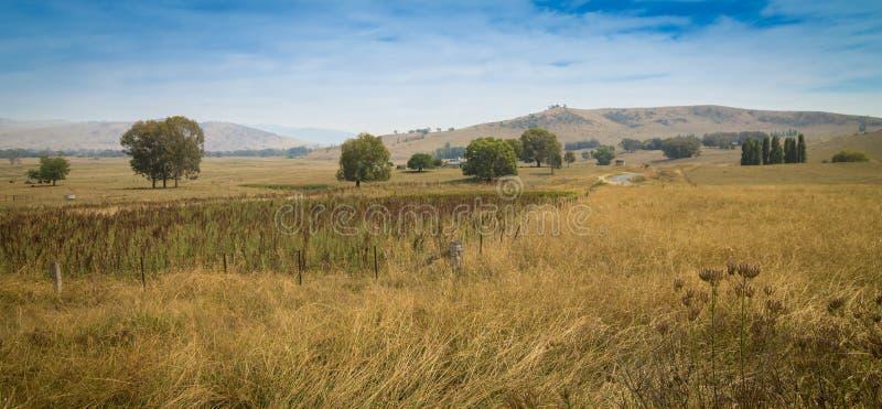 Ensamma träd i ett ensamt australiskt landskap arkivbild