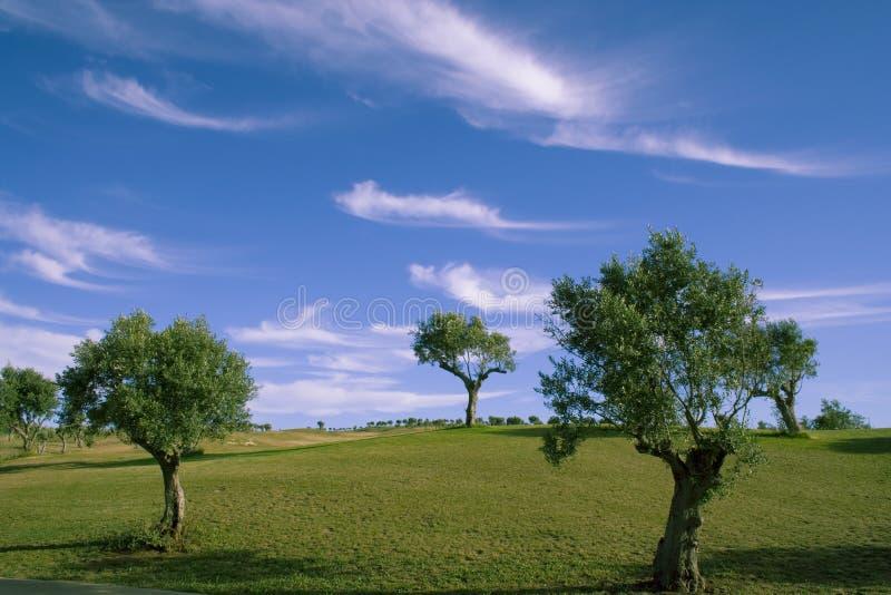 ensamma trees 1 royaltyfri foto