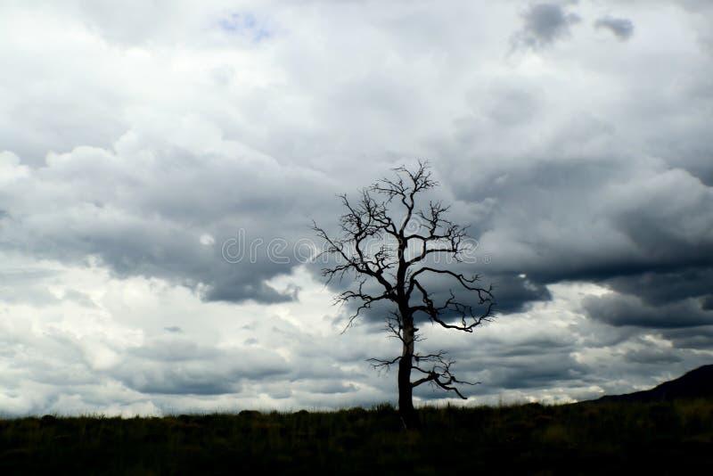 Ensamt avlövat träd på horisont med dramatiska turbulenta stormmoln i bakgrunden royaltyfri bild
