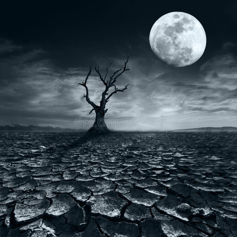Ensamt dött träd på fullmånenatten under dramatisk molnig himmel royaltyfri foto