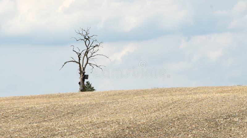 Ensamt dött träd på horisonten av ett plöjt fält fotografering för bildbyråer